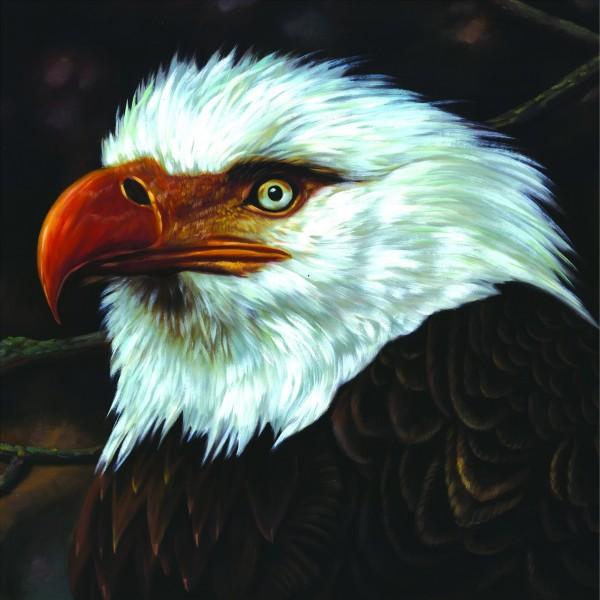 mogwai-hawk